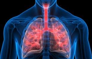 L-tyrosine, PCS, lungs, gut, Covid, Monash University, Australia, Research, bacteria, amino-acid, p-cresol sulphate, PCS, asthma, Professor, Benjamin Marsland, toxic, syndrome, Professor Benjamin Marsland